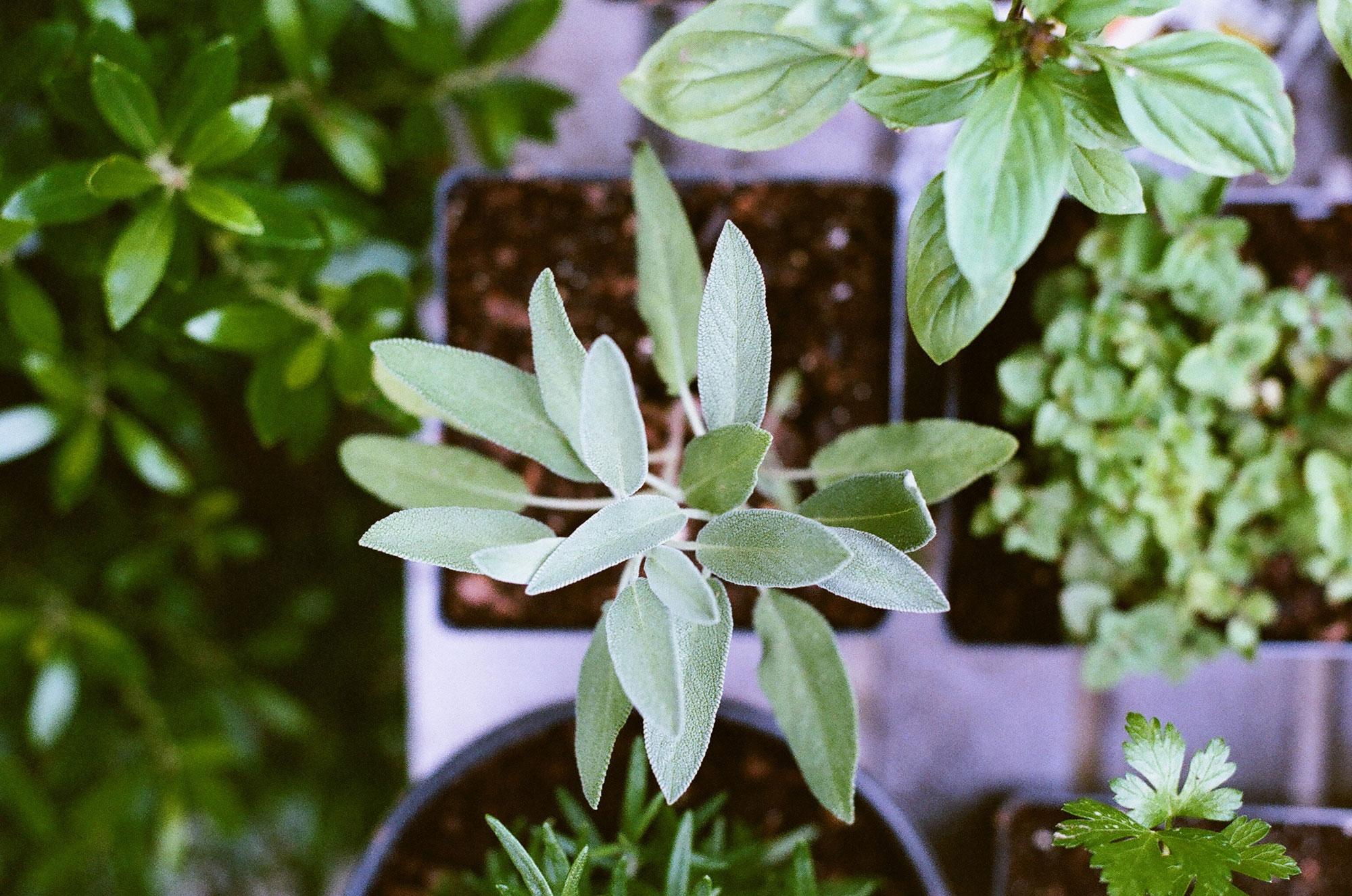 danielle-beauchamp-naturopathe-image-herbes