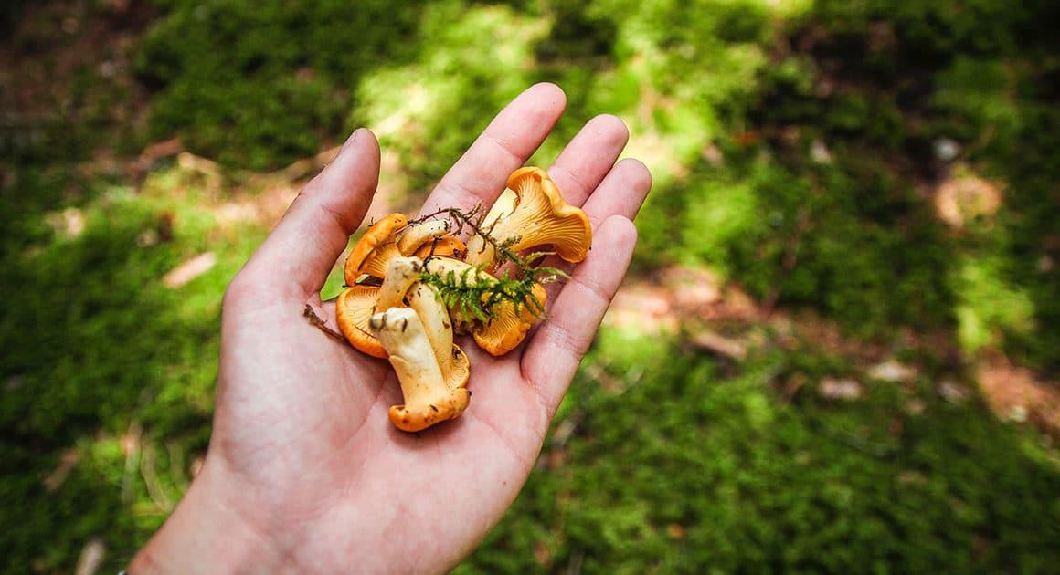 main contenant des champignons