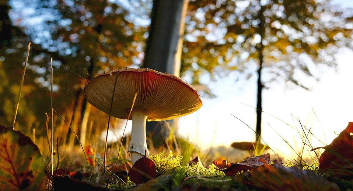 champignon sauvage dans la forêt